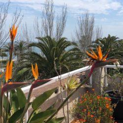 Strelitzie auf der Terrasse in Cambrils