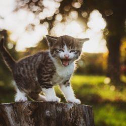 Kleine Kae auf Baumstamm jammert b